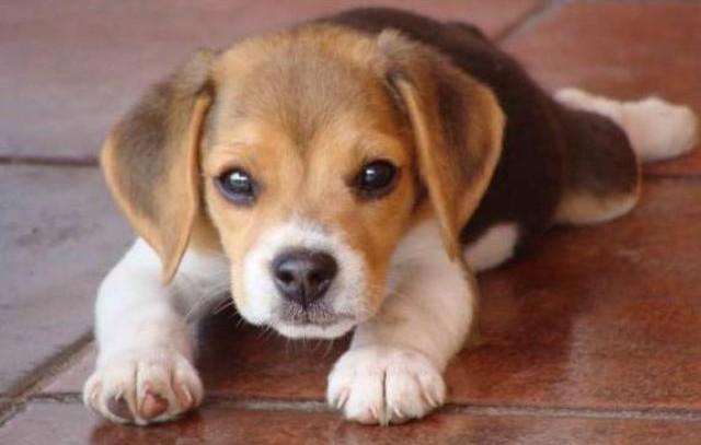 """Madrid aprueba la Ley de Protección de Animales de Compañía que establece el """"sacrificio 0"""""""